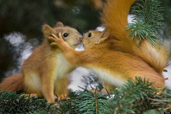 Valentine's Day Animal Love.  (Photo by FotoLibra / Barcroft Media / Getty Images)