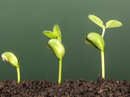 HR Mentoring and Development