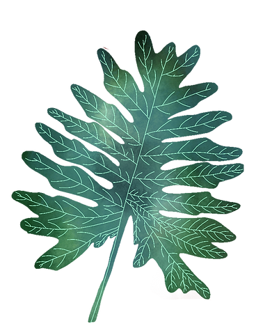 feuille foret_edited.png