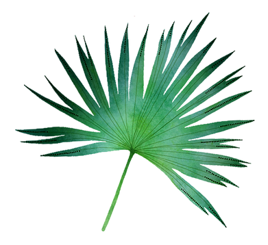 plante tropicale.png