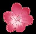 une fleur de cerisier.png