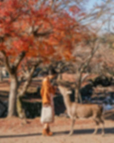 Nara_Deer_Japan_2.jpg