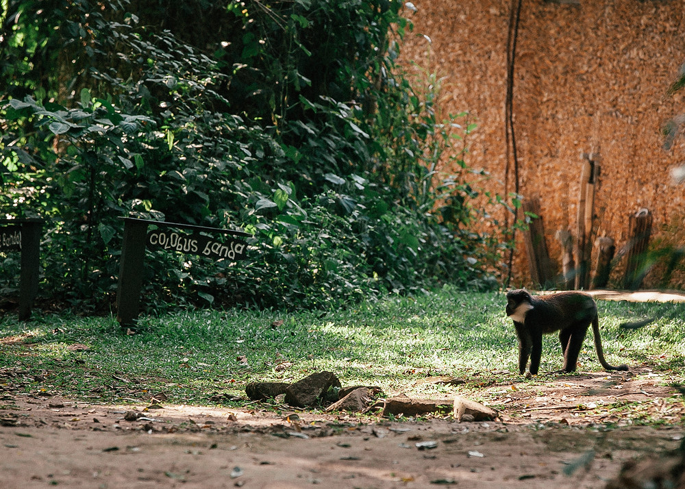 Primate Lodge, Kibale Rainforest, Uganda