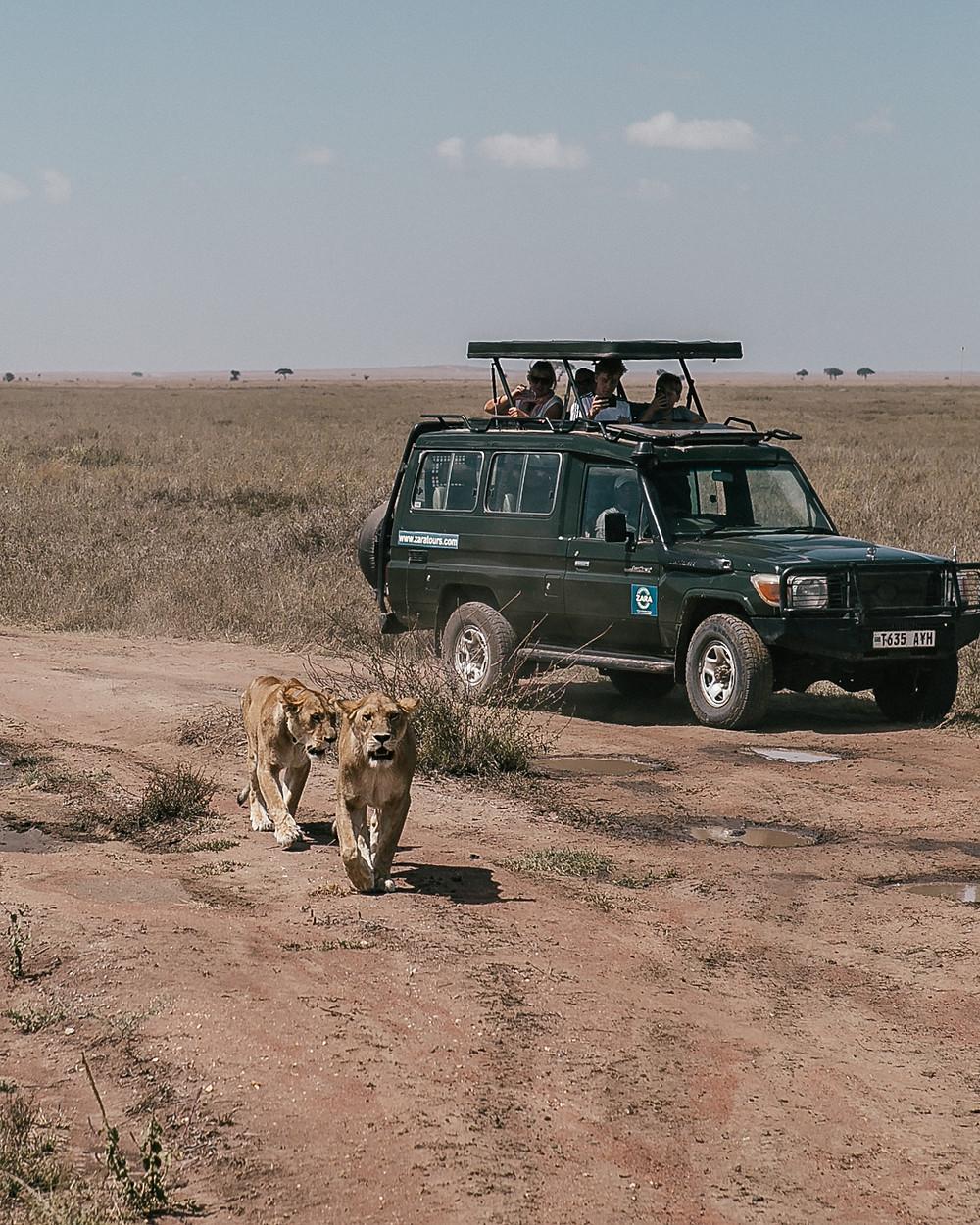 Serengeti, Tanzania, Africa Safari