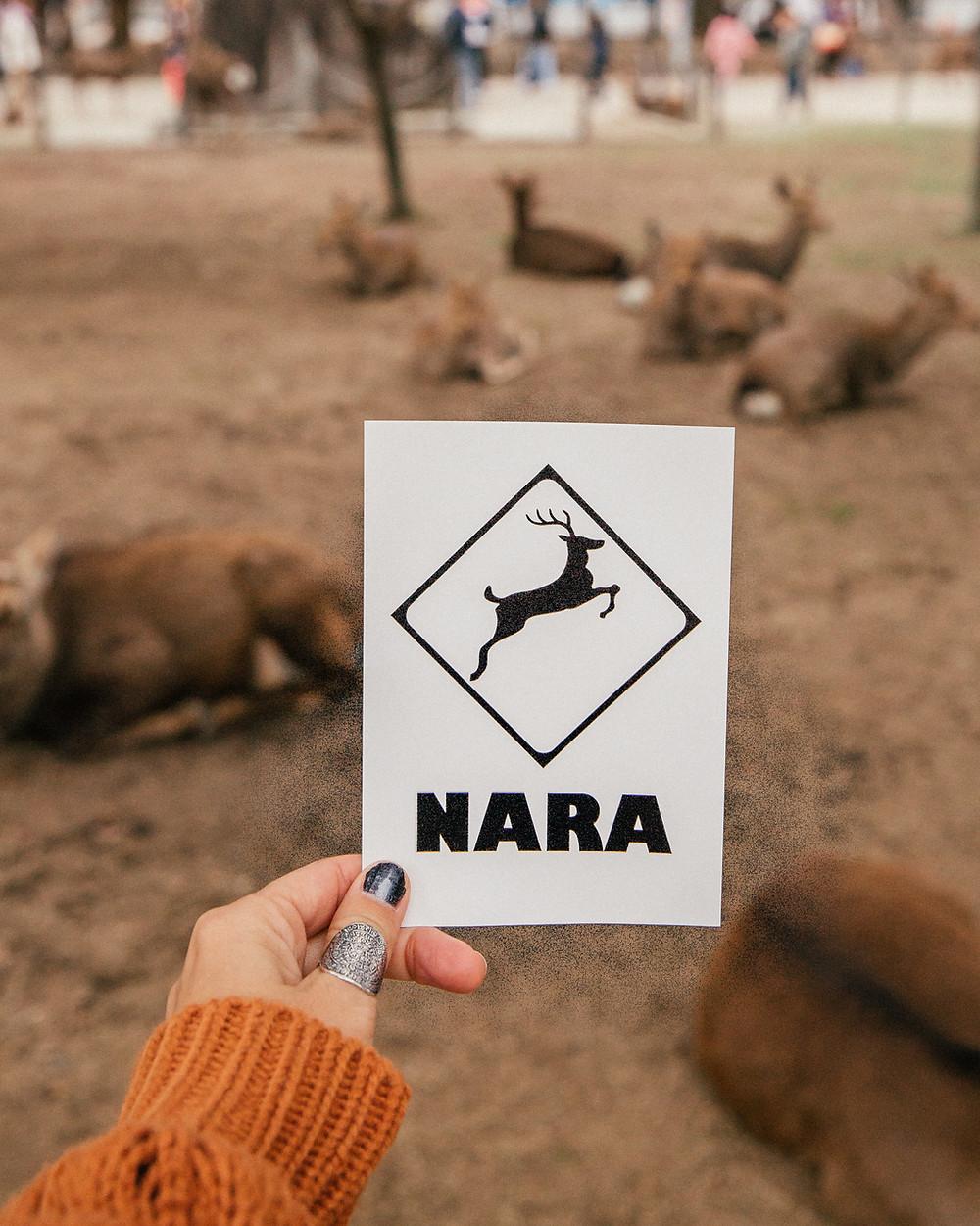 Nara Deer, Japan