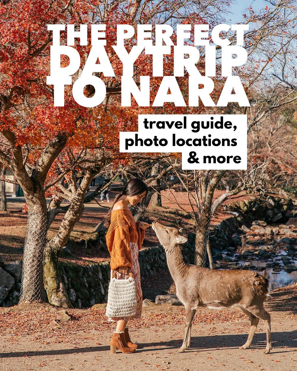 Nara, Japan Daytrip Travel Guide