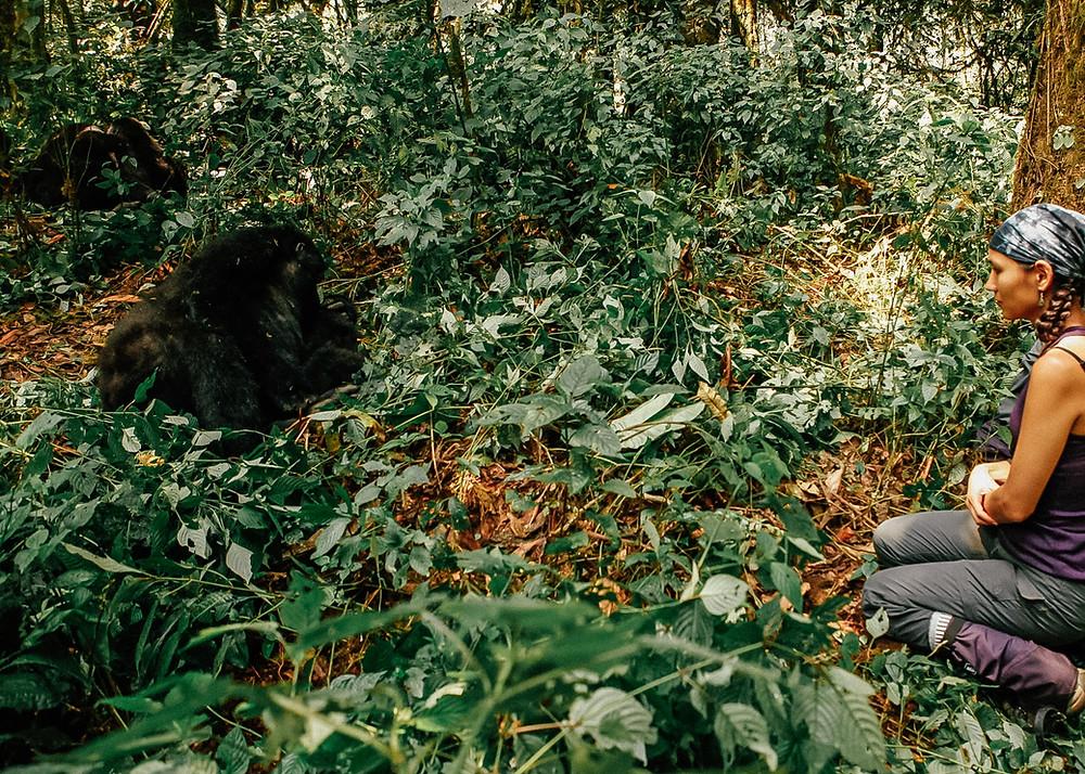 Habinyanja, Gorilla Trek, Bwindi Impenetrable Rainforest