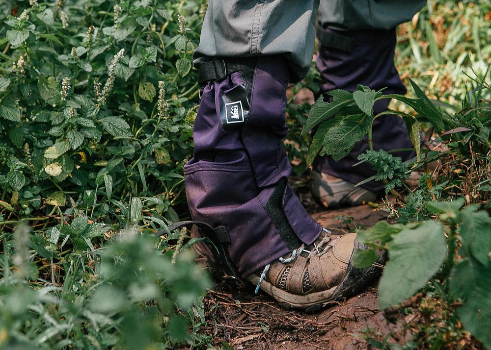 Safari Ants, Gorilla Trek, Bwindi Impenetrable Rainforest