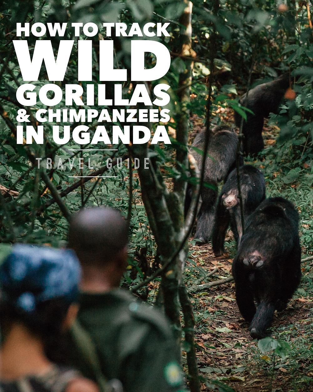 Bwindi, Gorilla Tracking, Uganda