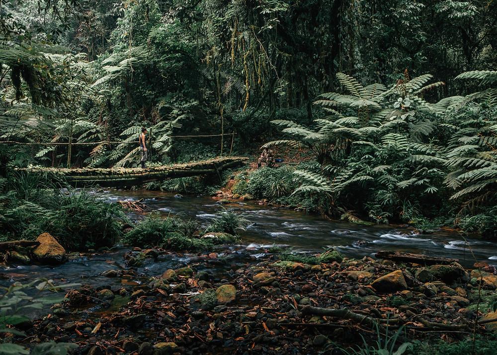 Nkuringo Trek, Bwindi Impenetrable Rainforest