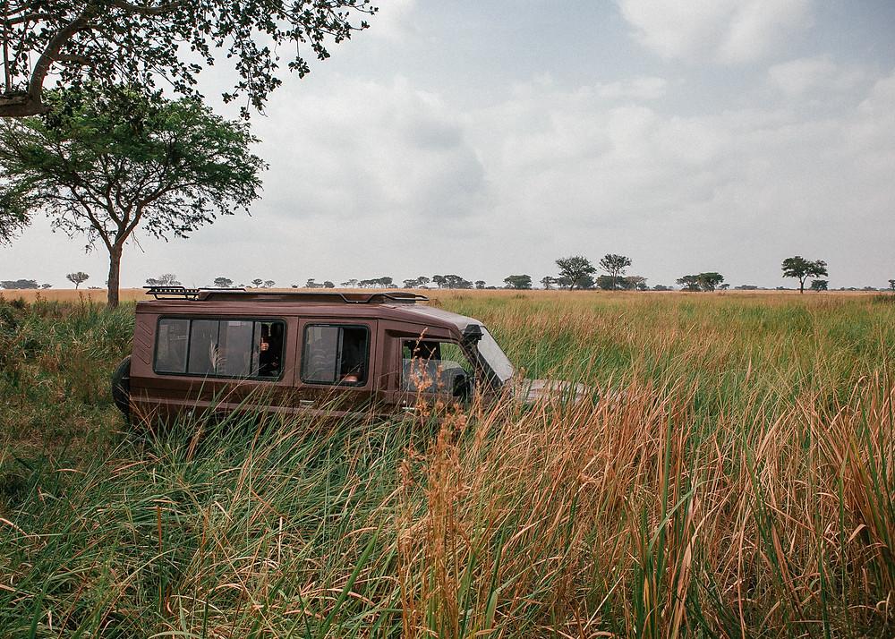 Safari Queen Elizabeth National Park, Uganda