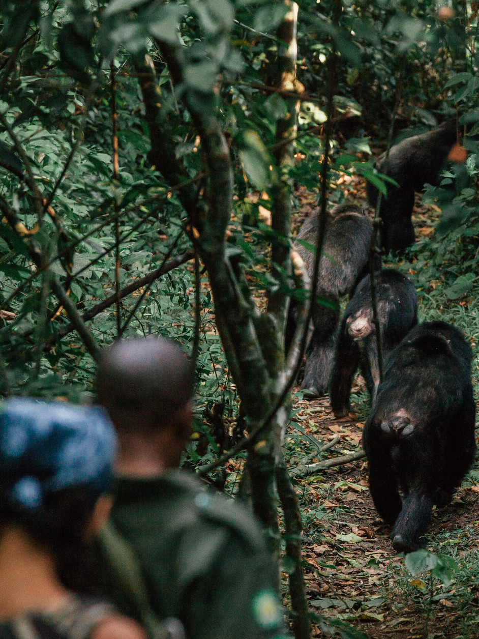PARADISE FOUND IN THE PEARL OF AFRICA: ULTIMATE GUIDE TO SOUTHERN UGANDA