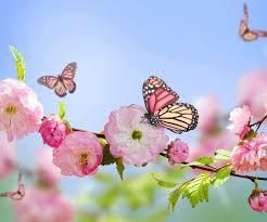 #ΜΕΝΟΥΜΕΣΠΙΤΙ και γνωρίζουμε τον κύκλο ζωής της πεταλούδας