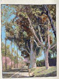 Riverside California-1
