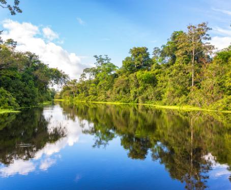 LVMH lança programa de reabilitação da Floresta Amazônica