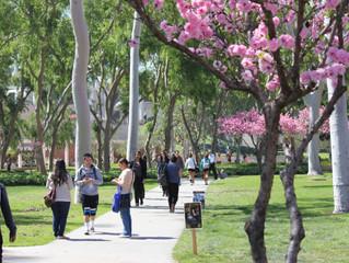 Venha estudar na California State University Long Beach e torne-se um líder global