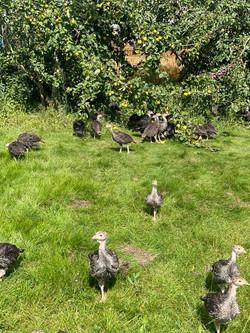 Moorgate Farm