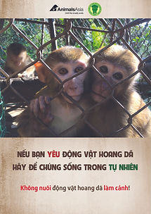 Stop Keeping Macaques poster - Animals A