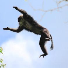 Macaque positivity!