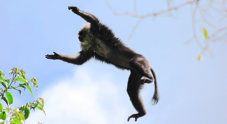 Lion%20Tailed%20macaque_Aravin170396_lic