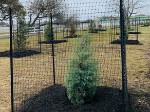Landscaping Project along Polo Club Drive