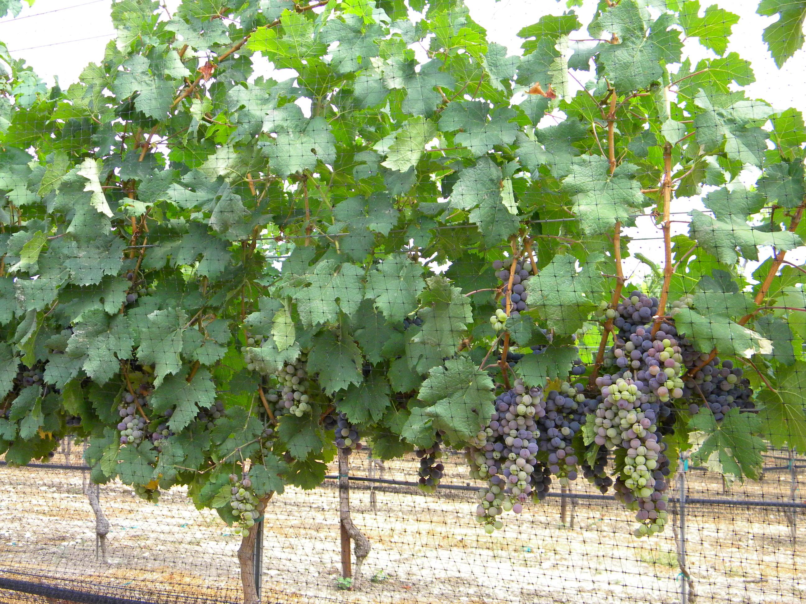 Vineyard supplies and equipment
