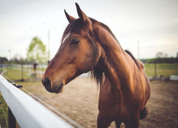 A-horse-in-an-enclosure.jpg