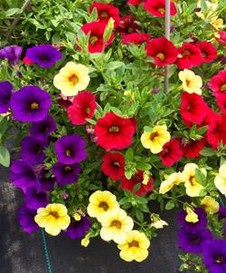 Spring Ferns & Hanging Baskets