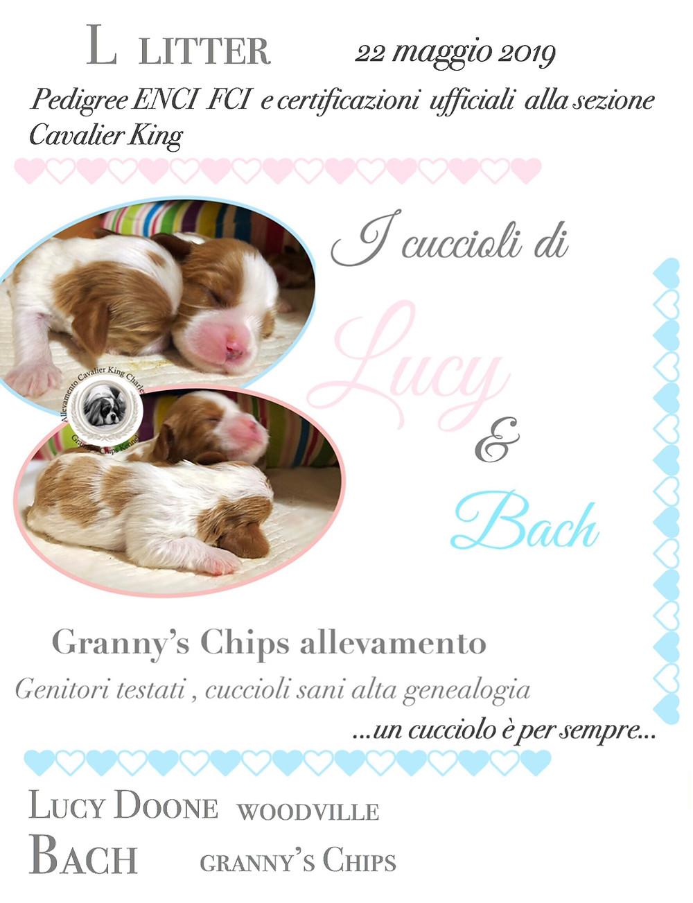 Contatta Granny's Chips per conoscere le nostre future cucciolate disponibili