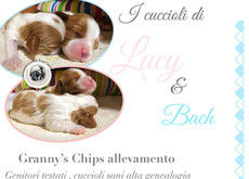 I cuccioli di Lucy & Bach - 22 maggio 2019