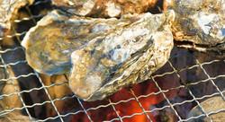 壱岐東部内海湾殻付き牡蠣