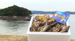壱岐東部殻付き生牡蠣2キロ