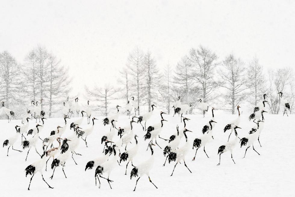 ©Bernard Coste
