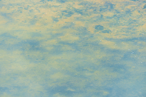 Hommage à Monet 10-30062019-_DSC3981