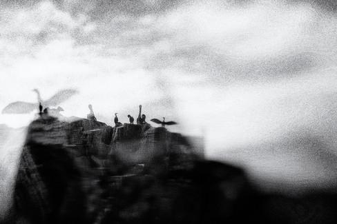 ©Theo Figueroa