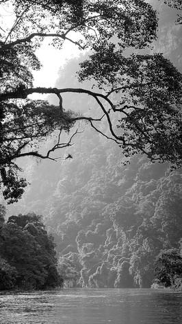 ©Van-Minh Duong
