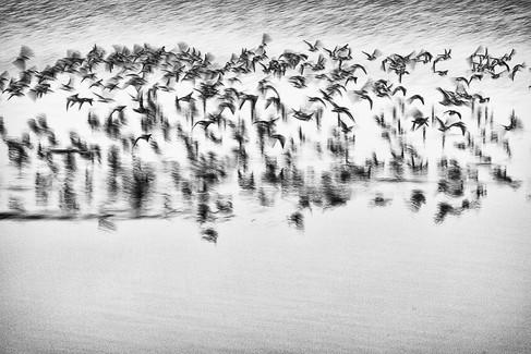 Les oiseaux 01