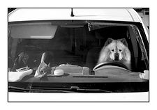 24_Vie de chien, Le Crotoy, France_Pasca