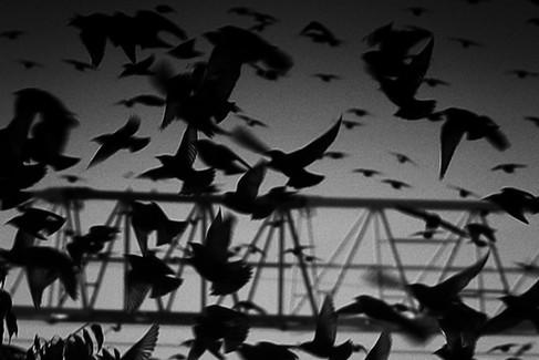 Les oiseaux 07