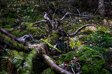 Les forêts sont des apocalypses