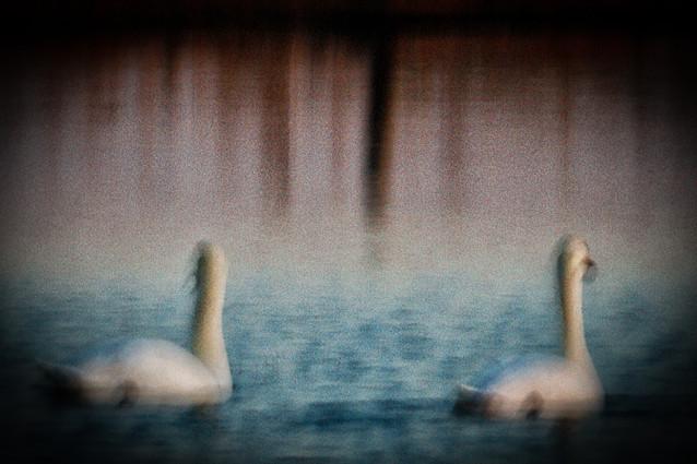 Les oiseaux 09
