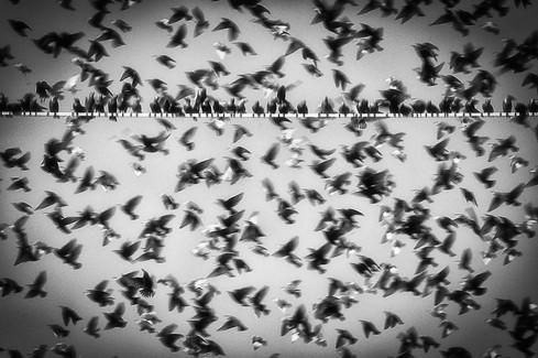 Les oiseaux 04