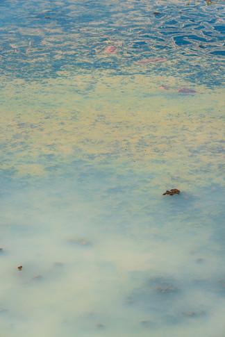 Hommage à Monet 7-30062019-_DSC3979