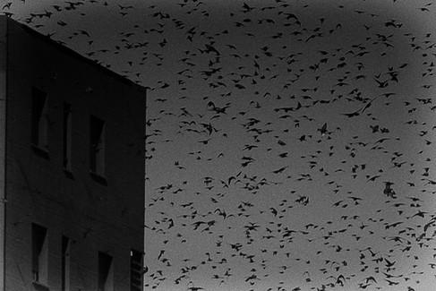 Les oiseaux 05