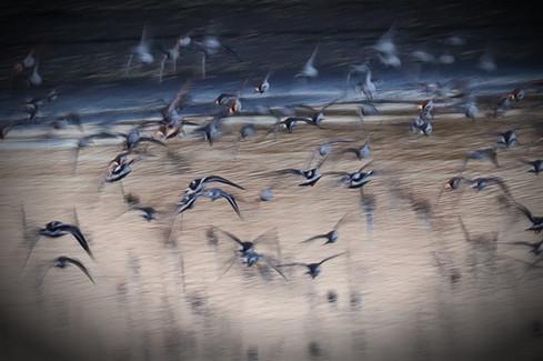 Les oiseaux 02