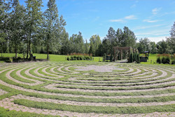 Labyrinth with Woolly Thyme