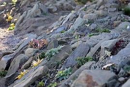 Alpine Crevice & Native Plant