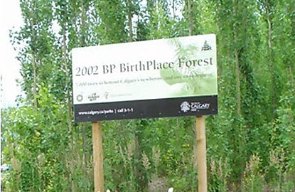 BP Forest, Birthplace Forest, birth place forest
