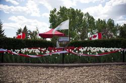Tulips0008