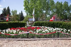 Tulips0002